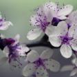 Avatar Flower3