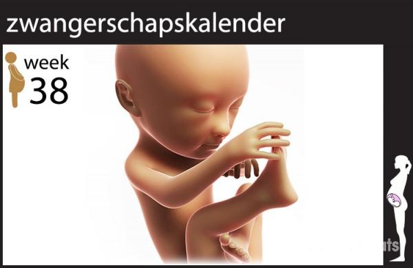 38 Weken Zwanger Zwangerschap Week 38 Mamaplaats