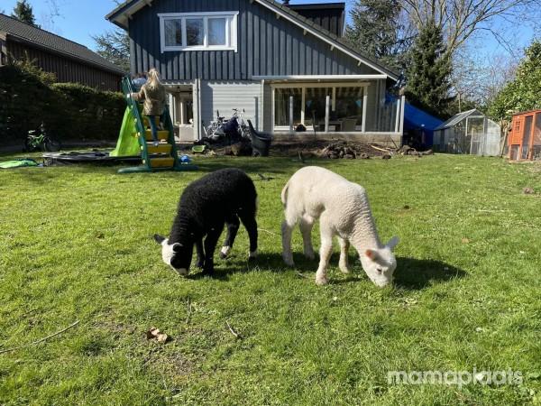 Afbeelding blog 'Een au pair in huis? Wat kost dat wel niet?'