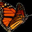 Avatar Butterfly92