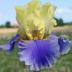 Avatar flowerydoe