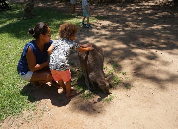 Marre-blog-kangoeroe_1467786935.jpg