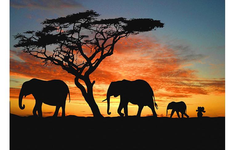 knuffelafrica