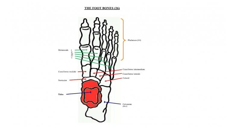 Footbones_1474476304.jpg